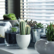 house plants under windowsill