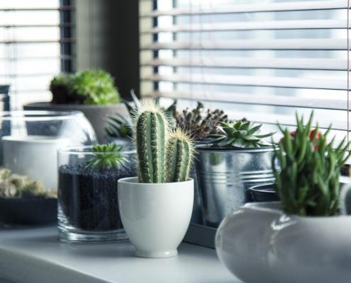 house plants under windowsill
