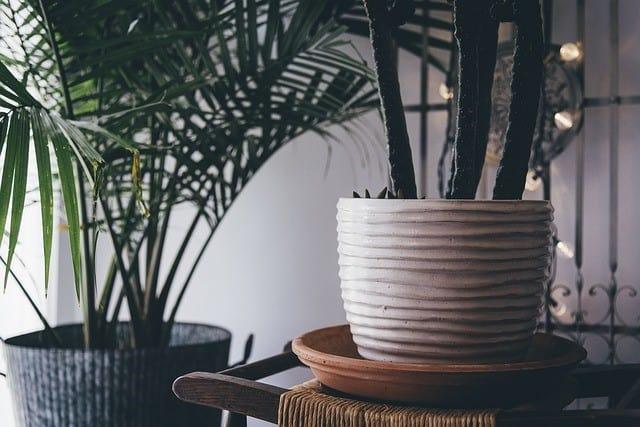 indoor plant decorations