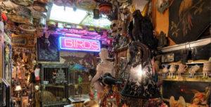 Steve's Weird House Seattle bird room